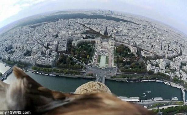 Απίστευτο βίντεο: Το Παρίσι μέσα από τα μάτια... αετού!