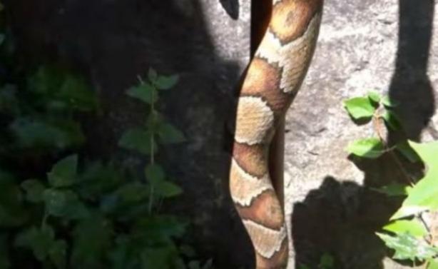 Νομίζεις ότι βλέπεις φίδι; Κοίτα πιο κοντά και σε 10 δευτερόλεπτα θα μείνεις άναυδος!