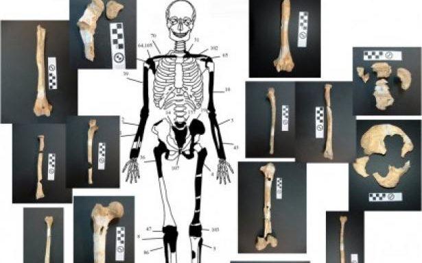zp_34924_skeletos4_413_355_new.JPG