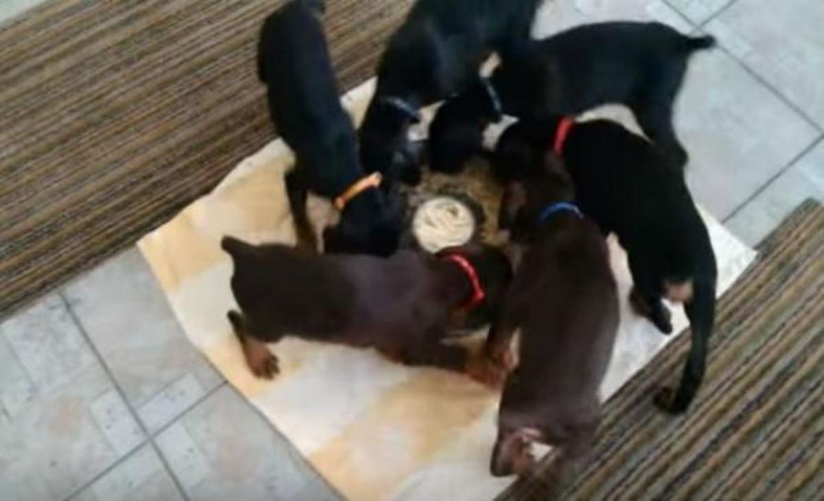 zp_53578_puppies.jpg